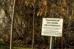 Gedenkbaum aus Lakoma für Atterwasch, Braunkohletagebau in der Lausitz