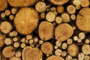 Scheitholz, ein umweltfreundlicher Energieträger