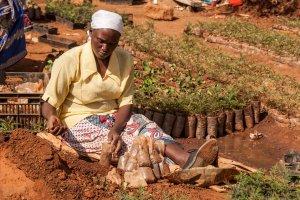 Eine Frau bereitet Setzlinge in er Baumschule der MCF vor.
