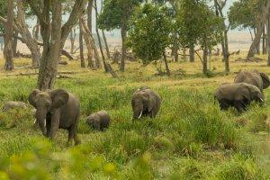 Elefanten am Wasser, Kenia