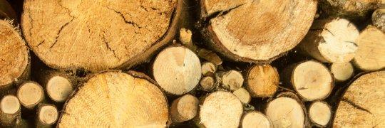 Holz als Energieträger